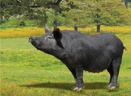 Vendita carne bovina francese a Palermo